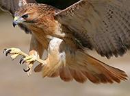 老鹰长颈鹿高清动物图片