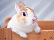 超可爱呆萌小兔子图片特写