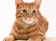呆萌猫咪高清动物写真萌图