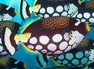 奇妙无比的海底生物精选图集