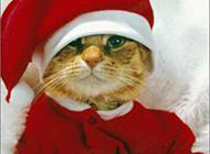 可爱搞怪的圣诞猫咪