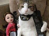 猫咪搞怪图片之我是大款啊