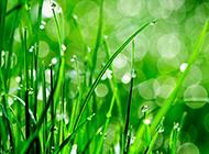 春天大自然风景图片清新背景