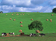 青葱郁郁的田园风景意境图