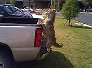 二货动物图片之搭个便车