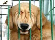 动物搞笑图片之还我自由