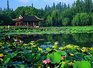 杭州西湖荷花图片清新优雅