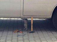 猫咪PS图之专业修理