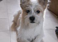 各种可爱梗类犬图片