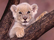 唯美可爱的动物合集摄影图片