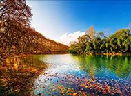 秋天枫叶美景图片如梦如幻