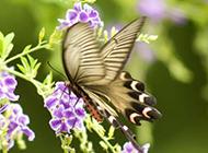 五彩斑斓的蝴蝶特写