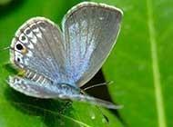 昆虫小动物飞蛾图片