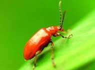 日常生活中甲虫各种姿态高清图片