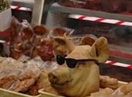 霸气搞笑图片之很帅的猪头