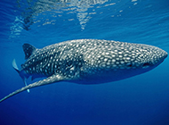 鲸鱼海底高清特写图片壁纸