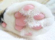 萌萌猫咪毛茸茸爪子可爱图片