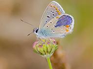 春日公园高清蝴蝶昆虫壁纸
