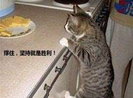 猫咪搞怪照片之坚持就是胜利