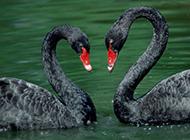 高清鸟类动物唯美写真摄影