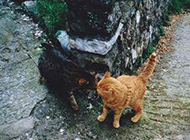 可爱搞笑猫咪图片之转角遇到爱