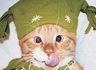 偷吃了的美丽萝莉猫咪