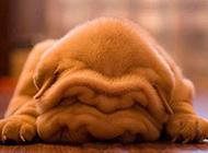 肉嘟嘟的可爱狗狗搞笑图片