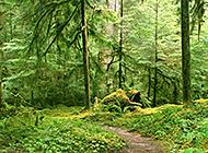 山林绿树丛生唯美护眼风景壁纸