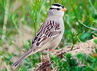 世界野生鸟类高清摄影壁纸