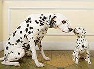 精选可爱的宠物狗狗高清壁纸