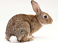 兔子鸭子可爱小动物图片