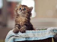 萌萌茶杯猫活泼顽皮图片大全
