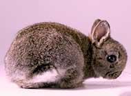 迷人动物 兔宝宝