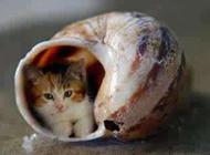 二货猫咪图片之我也要蜗居
