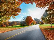 世界公路风景图优美迷人