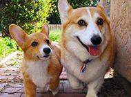 狗狗搞怪图片惹人发笑