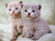 惹人喜爱的萌宠猫咪高清图片