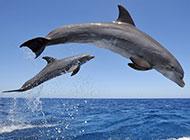 可爱海豚海面飞跃图片大全
