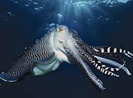 奇妙海洋生物精美壁纸
