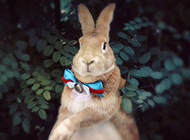 唯美梦幻可爱的小兔子图片