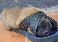 超搞笑动物图片之这床小了点