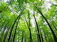 春天清晨绿色树林日出美景图片