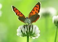 精选小清新类型植物动物特写壁纸