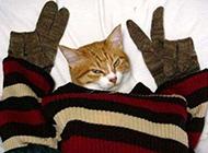 萌猫咪恶搞图片之万能的剪刀手