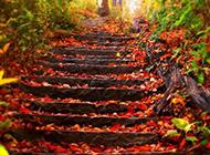精美秋天的景色壁纸赏析