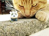 搞笑动物猫咪图片之临危不惧