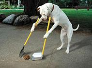 会扫地的狗狗