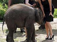 搞怪动物图片之粘人的小象