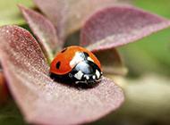 五彩缤纷的小昆虫高清晰壁纸精选