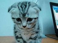 可爱猫咪搞笑图片之我错了主人